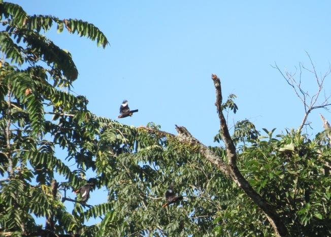 Bird, Namdapha